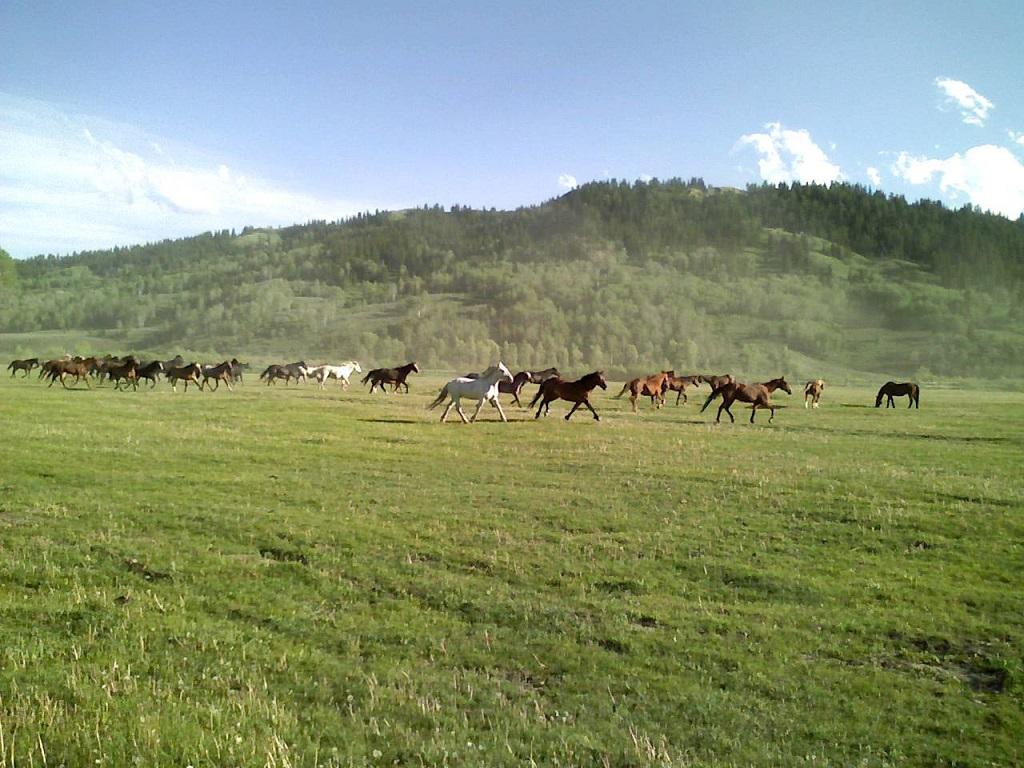 Wanderlust Wednesday: Goosewing Dude Ranch 2007